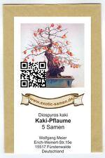 Bonsai - Diospyros kaki - Kakipflaume (5 Samen)