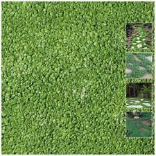 Dichondra Repens PolyGreen x100 Seeds. Landscaping turf replacement groundcover