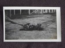 ABSTRACT 1920's PHOTO - HANDS PULLING TAIL OF MOTHER POSSOM COVERED IN BABIES