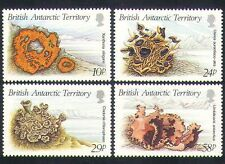 British Antarctic Territory 1989 Lichens/Nature/Flora/Fauna 4v set (n35146)