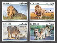Angola 2019 fauna  Lions  S202002