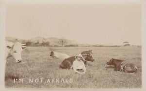 OLD VINTAGE PHOTO FARMING FARM ANIMAL CATTLE COWS FIELD WOMAN HUMOUR W3