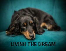 Metal Fridge Magnet Black Brown Dog Laying On Chair Living The Dream Humor Funny
