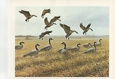 """1972 Vintage HUNTING """"FEEDING TIME, 1967"""" NORTH DAKOTA GEESE Color Lithograph"""