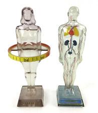 (2) Vintage C.1959 Hydro Diuril Anatomy Models Lot 1316