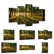 Cuadro en lienzo 30 Modelos Bosque verde sol rayos naturaleza 2510 ES
