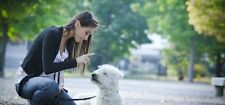 Professional Complete Dog Training Course