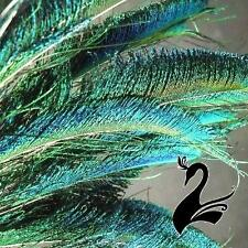 Feather Peacock Sword - Natural 40-50cm (Pack of 10) - Craft Millinery Fly Fishi