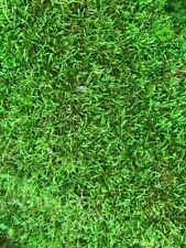 Live Moss combo 6 x 6 in of sheet moss, 3 in diam cushion moss and 4oz peat moss