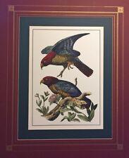 Nestor Parrots, Hand Colored after Gustav Mutzel, Large Format, Matted, Brehm
