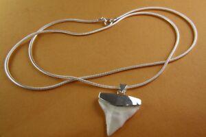 Shark Dente di Squalo (Prionace Glauca) Ciondolo Con Argento 925 Collana / 433