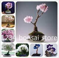 10 Pcs Seeds Sakura Bonsai Flowers Plants Cherry Blossoms Tree Garden NEW 2018 X