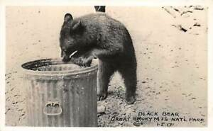 Cline ~ RPPC ~ Great Smoky Mountains National Park ~ Black Bear by trash can
