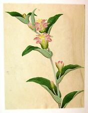 ANGLO CHINESE FLOWERS (3) W/COL C1860
