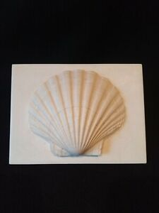 PLASTER PLAQUE OF SCALLOP SHELL