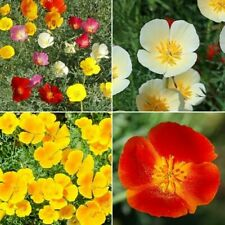 500+ Seed California Dreaming -California Poppy Flower Mix 4 Species Wildflower