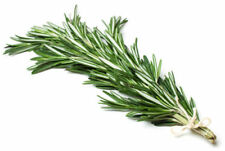 ROSEMARY - Pure Essential Oil - 10 ml Aromatherapy / Therapeutic Grade