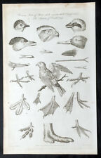 1795 William Henry Hall Antique Anatomical Print Classification of various Birds