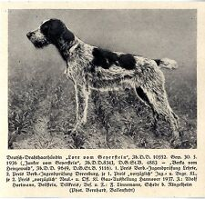 Lore von Geyerstein Deutsch-Drahthaar Jagdhunde & Züchter 1930-40
