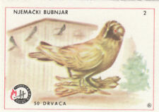 7. Red saxon Priest Pigeon Germany IMAGE CARD MATCHBOX LABEL 60s