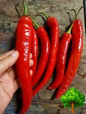 *UNCLE CHAN* 50 SEED RED THAI CHILI PEPPER LONG LITTLE SPICY ORGANIC HEIRLOOM