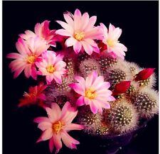 Mix Cactus Seeds Japanese Succulents Seeds Rare Indoor Flower Mini Plant Cactus