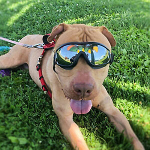 Dog Goggles glasses Anti-UV Eyes Protection Windproof Pet Doggles Glasses AU