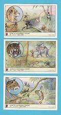 ANIMALS  -  CAFFE  LAVAZZA  TORINO  -  SET  OF X 6  WILD  CATS  CARDS