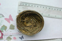 Grass Birds NEST 8-9cm Across x 3.5cm Deep - Decorative Use - Touch of Nature