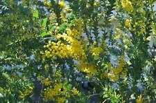 Winter Full Sun Evergreen Plants, Seeds & Bulbs