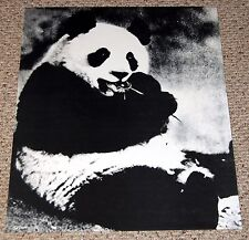 PANDA BEAR with Lollipop Poster 1970's BOB DARA Art