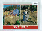 C6653ryt Australia NSW Goulburn Pelican Sheep Deer Farm Multiview postcard