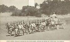 1930s Printed Postcard Team of Belgian Mares Horse Peffer Stockton CA Unposted