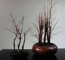 50% off end of season sale - set of 2 outdoor forest bonsai trees