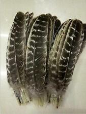 Wholesale 20 pcs precious wild turkey tail feathers 8-10inch /20-25cm E