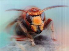 3 -D - Ansichtskarte: Hornisse - Vespa crabro - Hornet - schönes Porträt