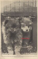 BABY Pomeranian Puppies Dog 1934 Vintage PHOTO Art Print