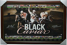 Black Caviar Signed 25 Out of 25 Wins RETIREMENT LE Facsimile Print Framed NOLEN