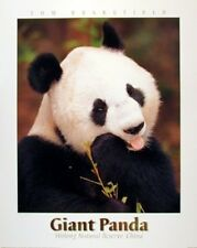 Wall Decoration Giant Panda Bear Animal Bamboo Wildlife Art Print Poster (16x20)