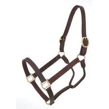 Royal King Dark Brown Leather Track Halter Horse Tack Equine