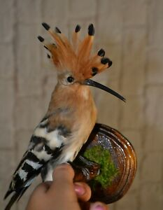 Stuffed bird 1 PC  Taxidermy hoopoe 02 Mounted collection gift