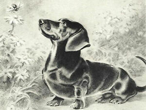Sausage Dog Bee Full drill Diamond Painting Dachshund Landscape Embroidery N8222