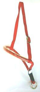 Horse & Rider Brand Red Bungee Tie Down on Nylon Head Strap