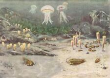 """CAMBRIAN SEA 500,000,000 years ago Color Print By Z Burian 1958 VF Clean 9x13"""""""