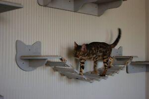 Cat shelves bridge Cat Bridge Cat wall furniture Cat shelves wall Cat furniture