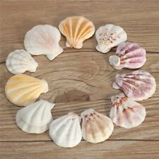 Beautiful Natural Beach Mixed Sea-shells Animal Theme Organic Materials Seashell
