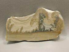 Cotham Marble Stromatolite Polished Stone Slab 3.75 inch Fossil England #1