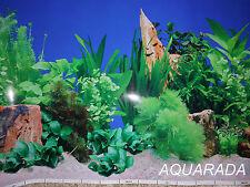 Fotorückwand 120 X 50cm Aquariumrückwand