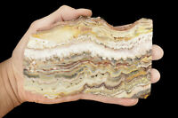 "Crazy Lace Agate Slab 6 1/2"" Lapidary Slice Raw Rock Mineral Specimen Crystal"