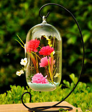 "2xHanging Glass Air Plant Terrarium/Candle Holder / Bird Feeder 8"" H - Hch0508"